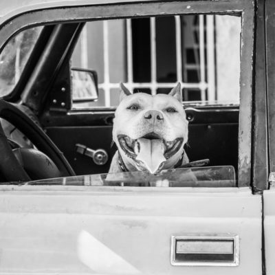 cuba-street-pets-1