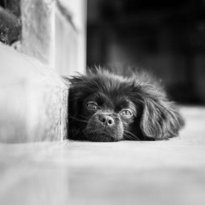 cuba-street-pets-3