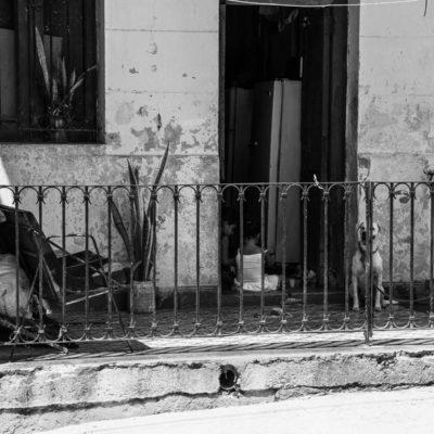 cuba-street-pets-5