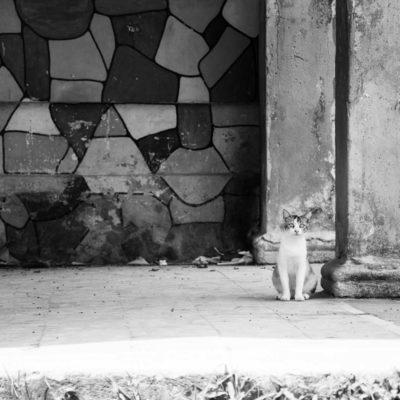 cuba-street-pets-6