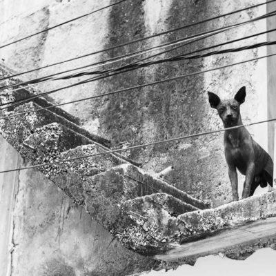 cuba-street-pets-7