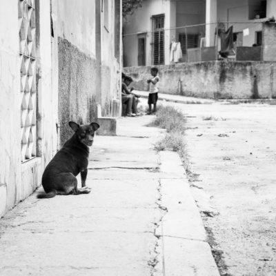 cuba-street-pets-8