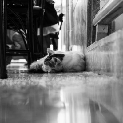 cuba-street-pets-9