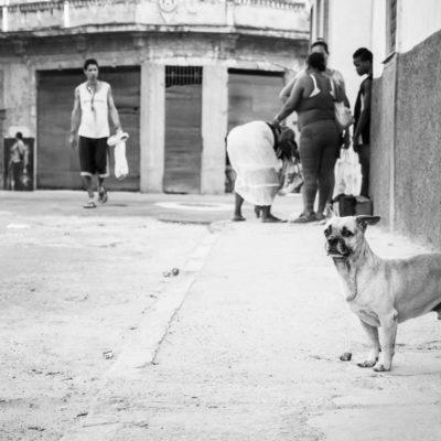 cuba-street-pets-10